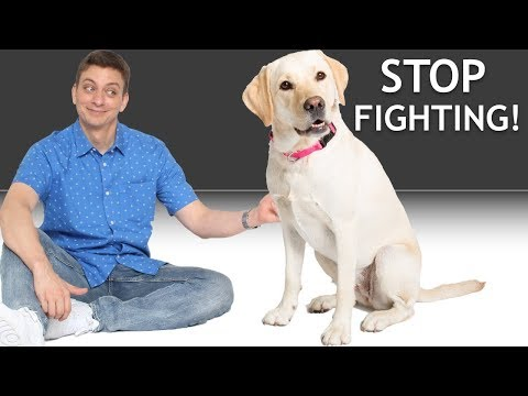 How do I get my 2 dogs to stop fighting? (Answering a Patreon Question)