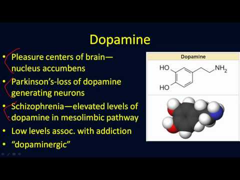 Neurotransmitters Overview