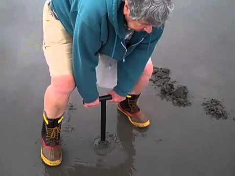 Razor clam dig Gearhart, Oregon 06/26/2013