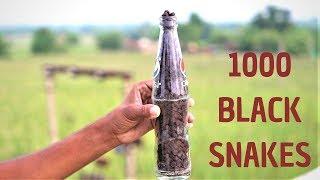 1000 सांप की गोलियों को बोतल में डालकर चलाया | Amazing Experiment |
