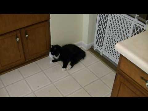 Symptoms of Stroke In Cat