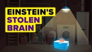 A Man Steals Albert Einstein