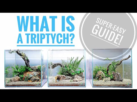 The 3-in-1 Aquascape - HOW TO create a TRIPTYCH!!