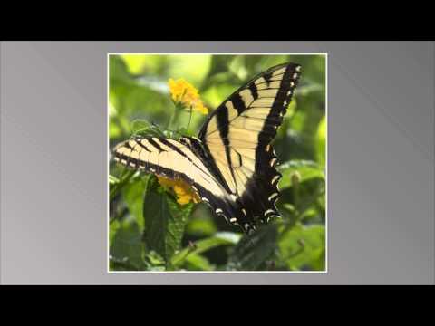 Daniel Stowe Botanical gardens Butterflies & Hummingbirds