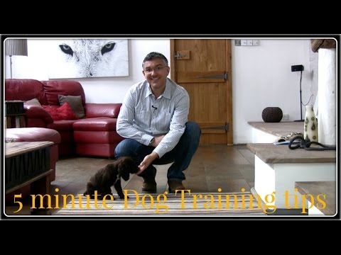 Dog Training tips with Whittard of Chelsea.