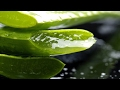 Aloe vera gel pure and organic | How to make and use aloe vera gel without mess
