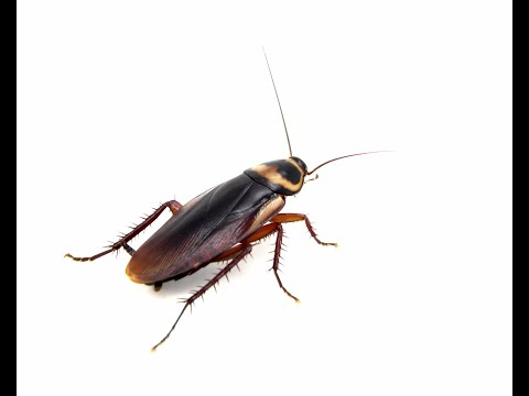 Cockroaches: Facts, signs, and prevention tips
