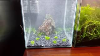 Aquael Shrimp Set Smart 75 Gallon30 Liters Tank Nr 12