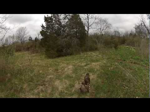 Falconry with my RedTail Hawk