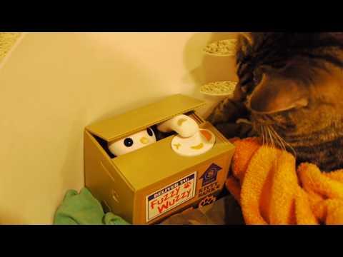 Cat swatting plastic cat