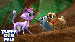 Rolly And Bingo Learn How To Dig With Hissy Puppy Dog Pals 2018