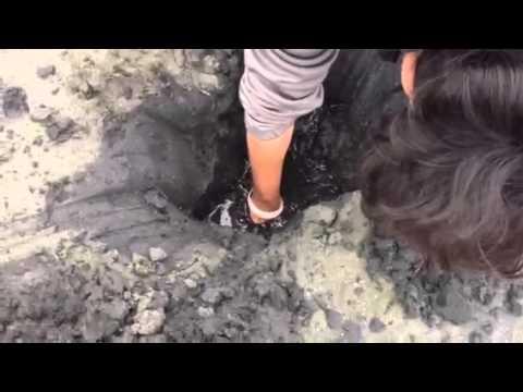 Clamming Geoduck In Bodega Bay,CA