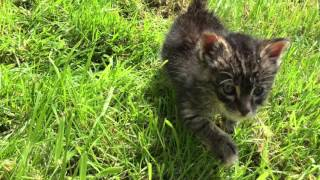 Котето, което оцеля...