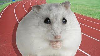 Hamsterları Yarıştırdık - Labirentli Yarışma