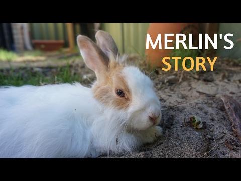 Merlin's story/DRAWING MERLIN'S LIFE