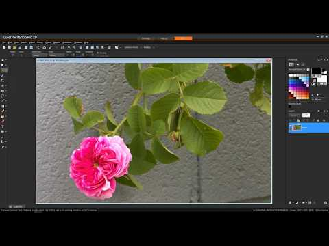 Working with the Raw Lab in PaintShop Pro x9