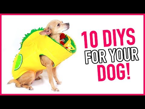 10 DIYs for Your Dogs! ~ Dog Clothes, Dog Beds, Dog Toys & More - HGTV Handmade