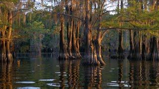 Nature: Sunset at Caddo Lake, Texas