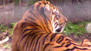 Visit Toronto Zoo 2019