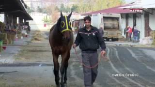 Emeğin Öyküsü - 14 Ocak 2017 (atların Dünyası)