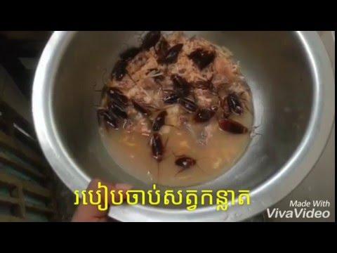 Cockroach Trap Homemade