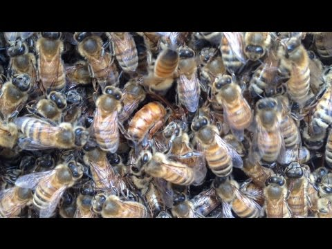 Speaking on Business - Deseret Hive