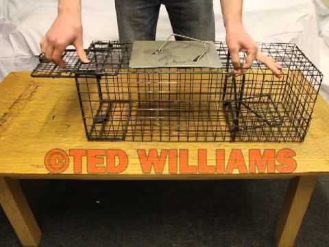 How to catch a rabbit - Setting the trap and triggering the trap