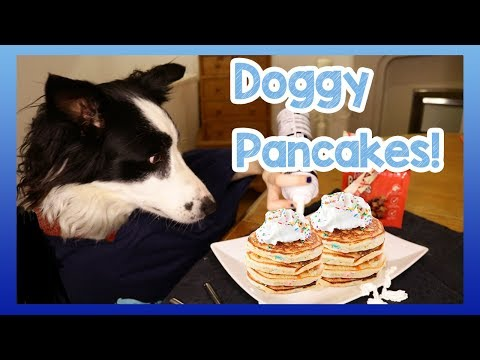 Simple DIY Doggy Pancakes! Make with Milo as He Creates Some Homemade Pup Pancakes for Pancake Day!