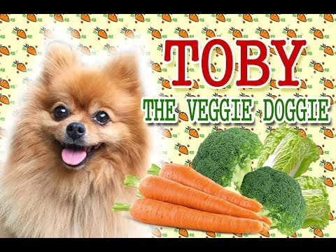 Pomeranian Dog Eats Vegetables | Carrot Dog