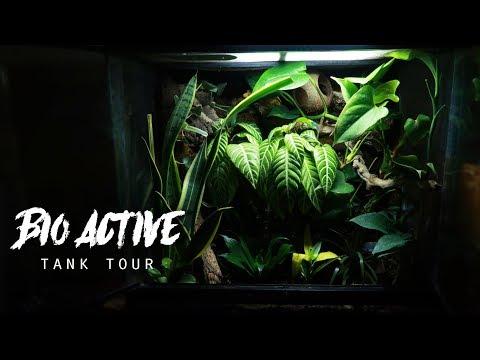Crested Gecko Natural Tank Tour!