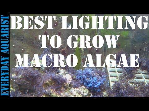 Best Lighting To Grow Marine Macro Algae In Saltwater Aquariums