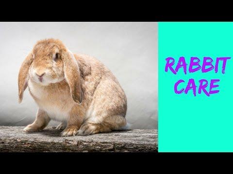 RABBIT CARE   RABBIT HEALTH   RABBIT ADVICE