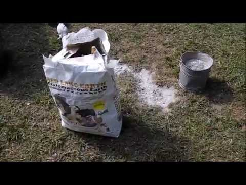 Diatomaceous Earth & Wood Ash For Chicken Lice And Mites