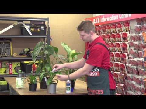 Tricks Of The Trade - Oiling Indoor Plant Leaves