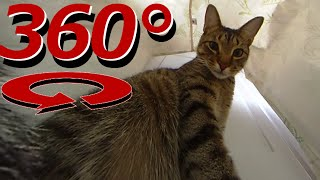 360 Degree Cat Video - The Cat