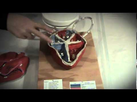 Peyton's Model of the Human Heart