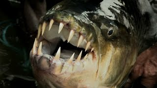 Legendary River Predators Up Close and Personal