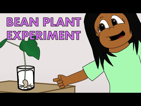 Fun Science Experiments For Kids - Growing a Bean Plant