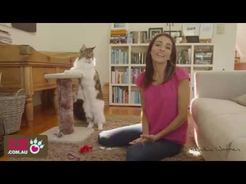 Indoor cats - how to keep them happy