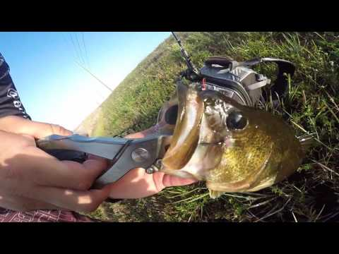 Catching Florida Everglades large mouth bass, Bowfin and gar