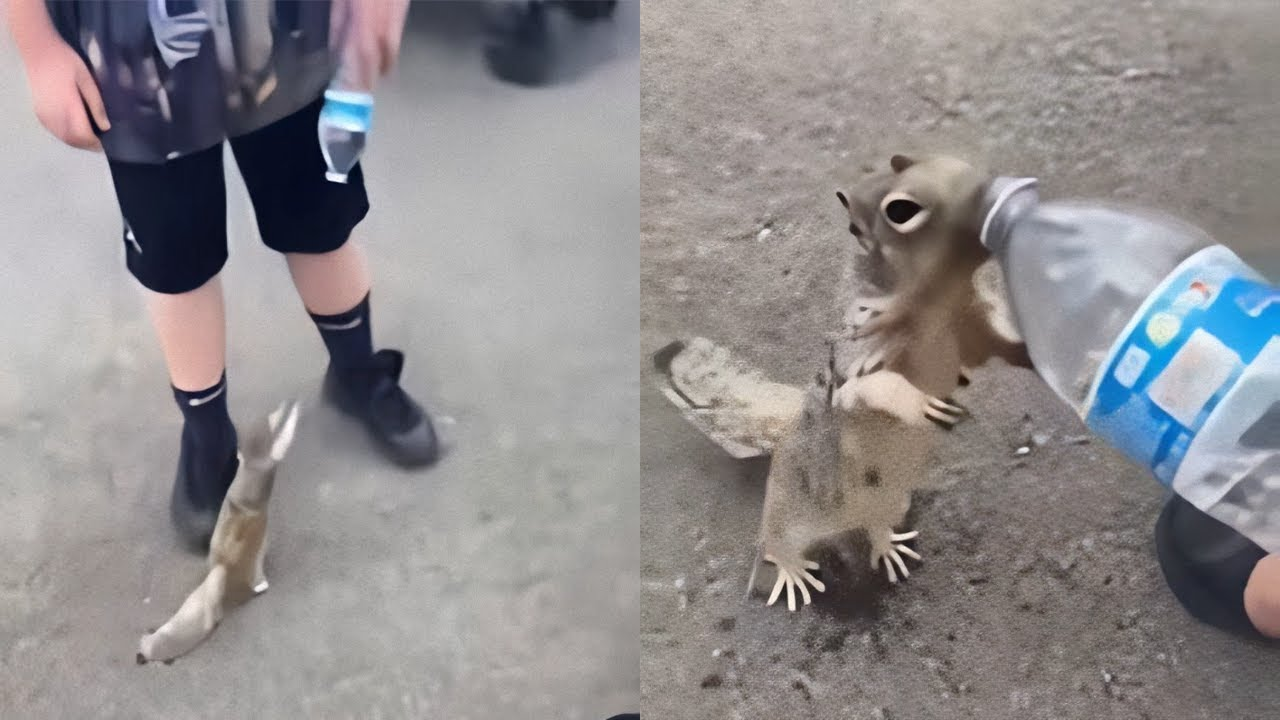 Animals That Asked People For Help