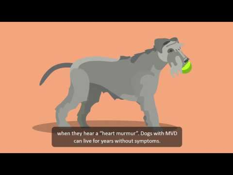 How to look out for heart problems in dogs