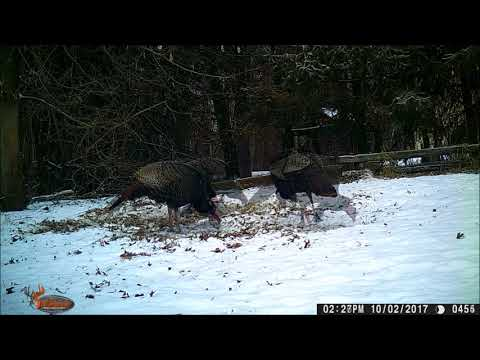 TRAIL CAMERA. Feeding the birds? 4 days, 1000 pictures.