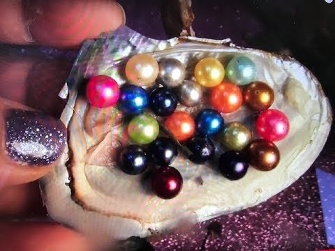TWIN PEARLS FOUND FROM BOTTOM OF OCEAN TO MAKE REAL PEARL NECKLACE