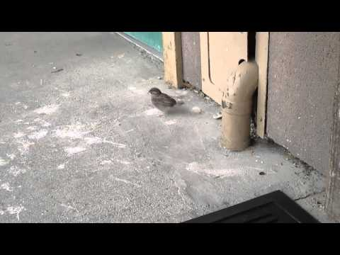 3 Baby Birds Fall out of Nest