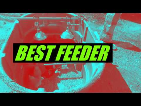 *BEST CHICK FEEDER*    LOOK and SEE