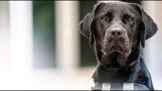 It's National Guide Dog Month! | Southeastern Guide Dogs