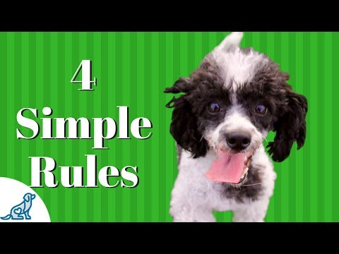 House Training A Puppy- 4 Simple Steps