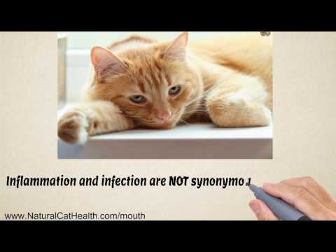 Cure For Stomatitis In Cats is Easy and Natural