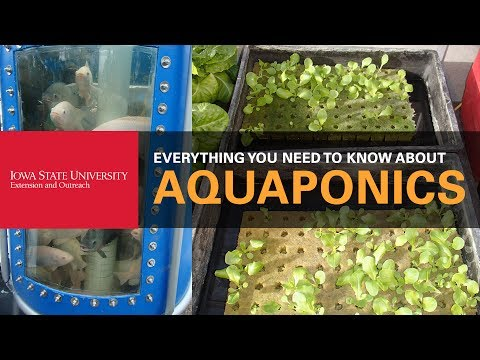 Everything You Need to Know About Aquaponics